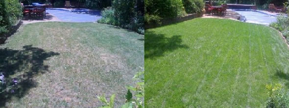 Phoenix Lawn Treatment, Organic Fertilizer